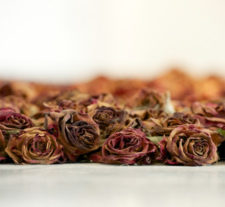 rosesroom05